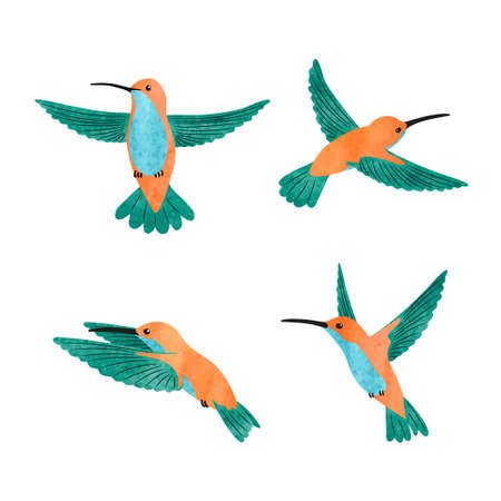 Cute hummingbird set. Vector watercolor illustration of small tropical birds. 矢量图像