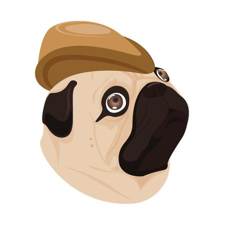 wrinkled face: dog brown hat on white background