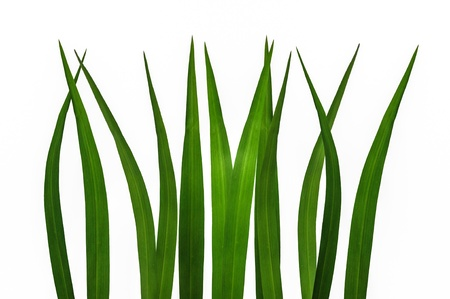 green grass isolated Stock Photo - 20405168