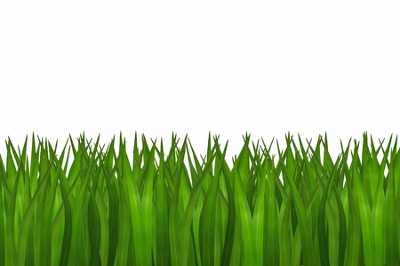 green grass isolated Stock Photo - 20405219