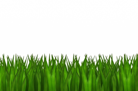 green grass isolated Stock Photo - 20405171