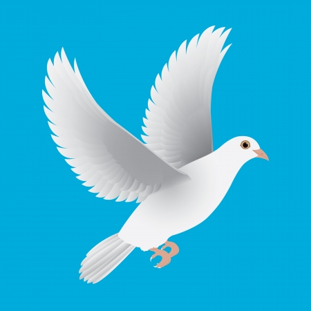 white dove isolated blue  Illustration