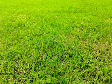 green grass surface ground Stock Photo - 21576443