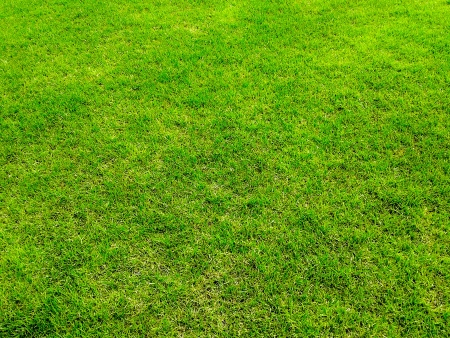 green grass surface ground photo