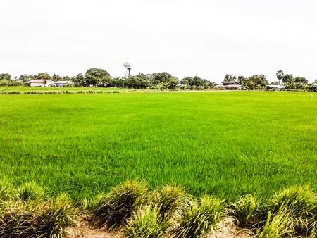 green meadows near suburb street photo