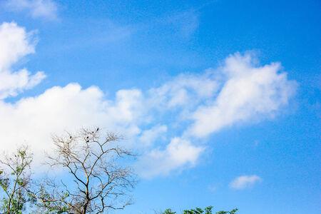 long shot: uccello su albero lungo nero girato con lo sfondo del cielo Archivio Fotografico