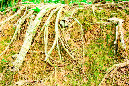 tree roots and layer soil nature photo