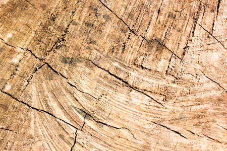duckboards: wooden texture background and bark covered in nature