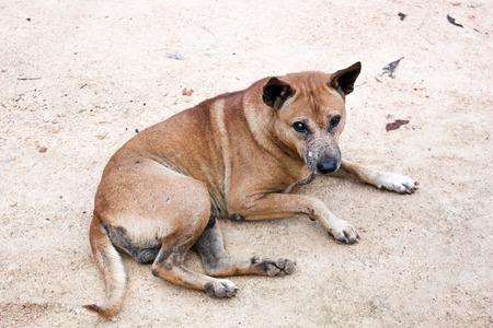 portrait of dog  photo