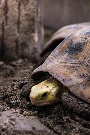portrait close-up turtle walk on ground photo