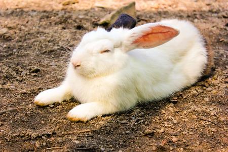rabbit cage: coniglio ha orecchio bianco e nero in gabbia, animali zoo