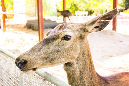 deer in the cage, animal zoo