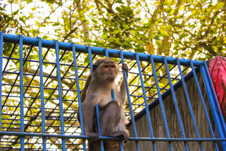 monkey in the cage, animal zoo Stock Photo