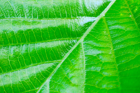 green leaves texture background photo