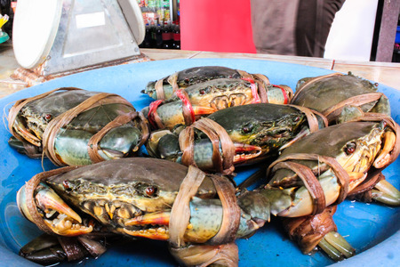 serrated: fresh serrated mud crab black in seafood market