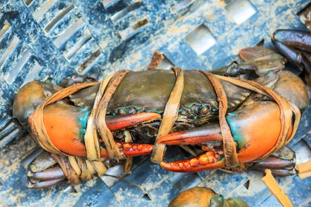 fresh serrated mud crab black in seafood market photo