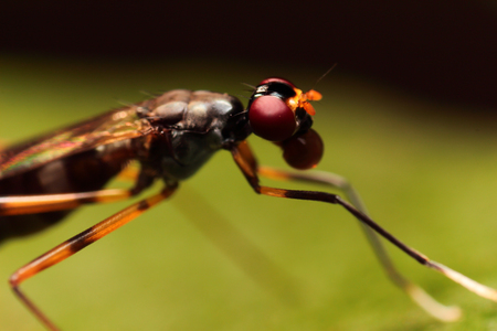 extreme macro: close-up extreme macro little insect soft focus details nature background