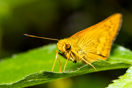 extra soft focus butterfly moth macro on green leaf photo