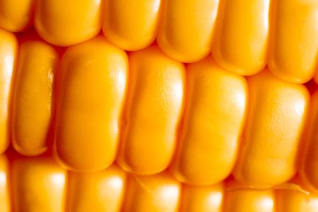 close-up fresh corn from garden in thailand photo