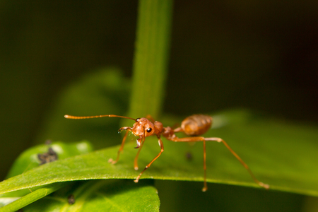 close-up ant on green leaf photo