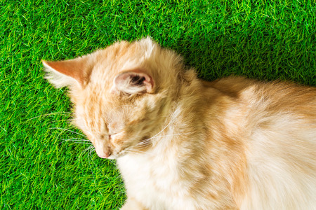 dozing: puppy portrait close-up cute cat dozing on green grass texture background eco concept