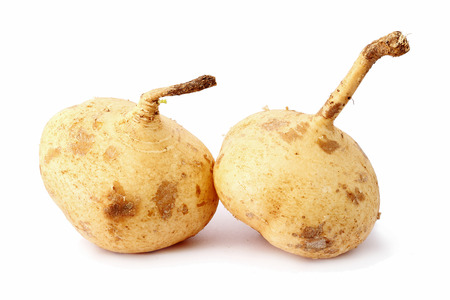 jhy: yam bean isolated background