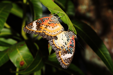 butterflies are breeding on nature background Imagens