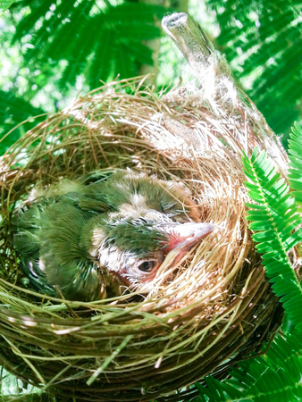 yearning: baby birds in a nest on tree nature
