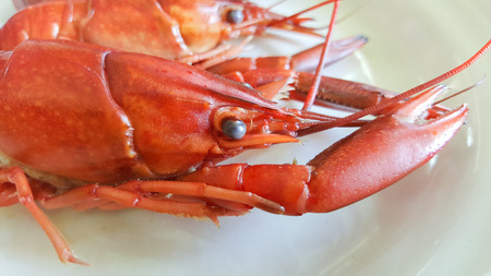 crayfish boiled on plate Stock Photo