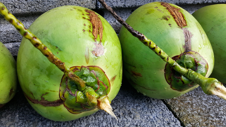 young green coconuts with nutrient, health benefits, dietary fiber and high electrolytes Stock Photo