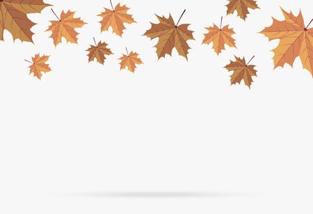 Automne feuille d'érable brun chute isolé sur fond blanc Banque d'images - 109888639