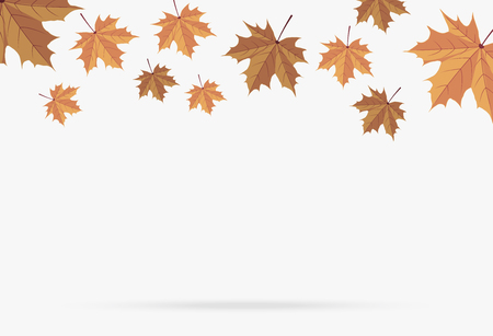 autumn brown maple leaf fall isolated on white background Ilustrace