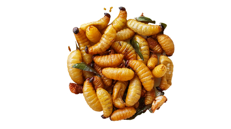sago worm, larvae from the red palm weevil isolated on white background with clipping path