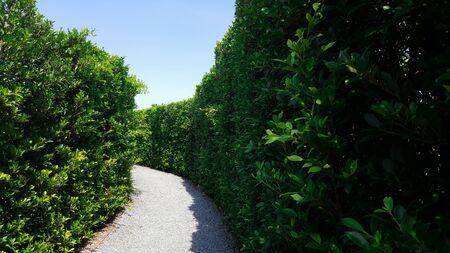 maze green plant wall