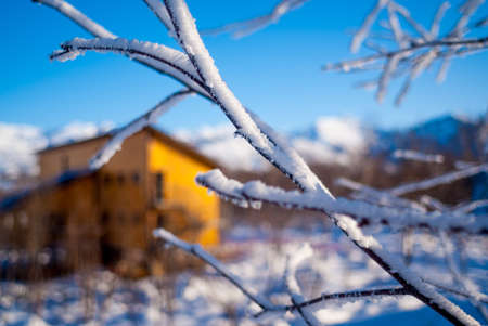 yule log: Blurred yelow guest house behind snowed branches