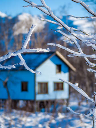 attic: Guest house behind snowed branches