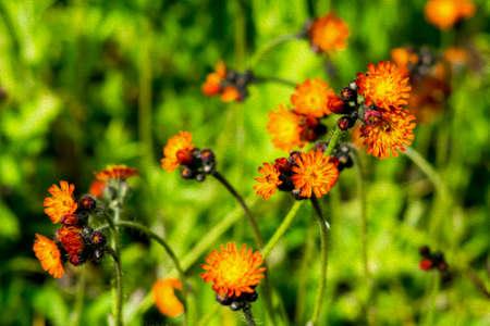 Bright orange flowers oil painted