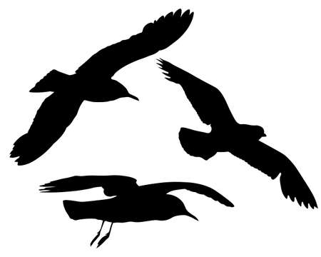 Group three silhouettes of flying seagulls vector