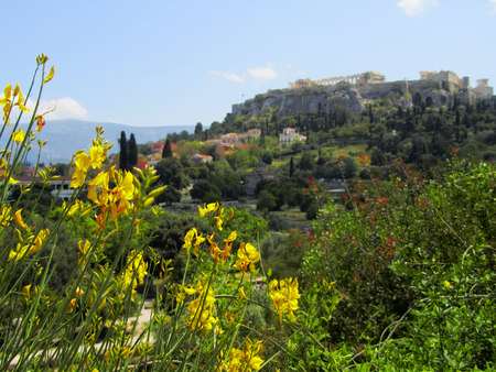 acropolis: Feeling the freshness of the yellow broom flowers while we enjoy the sight of the Acropolis on an Athenian hill.