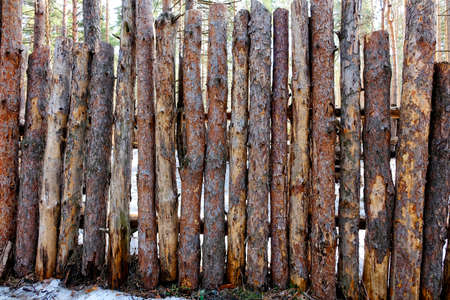 pino: Natural background - a fence made of logs of pine. Rough raw thin pine logs.
