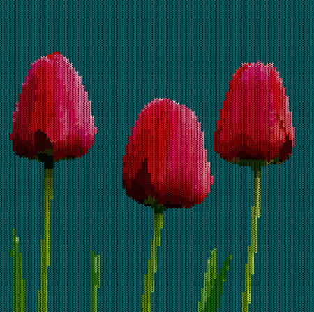 Knitted background - flowers tulips.  Red tulips on a dark cyan background.  Vector illustration. Illustration