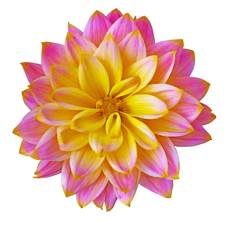 Flower pink yellow dahlia isolated on white background. Close-up. Macro. Element of design. Stock fotó