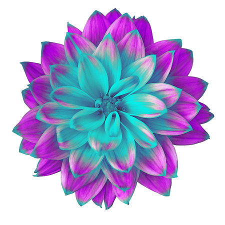 Flower cyan  lilac dahlia isolated on white background. Close-up. Macro. Element of design. Stock fotó