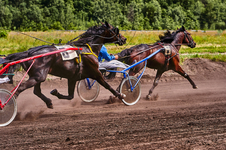 Horses run at high speed along the track of the racetrack. Competitions - horse racing.