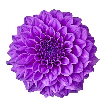 fiore viola ametista dalia isolato su sfondo bianco con tracciato di ritaglio. Avvicinamento. Natura. Archivio Fotografico