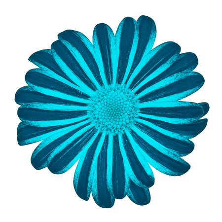 Flower cerulean cyan daisy isolated on white background with clipping path. Close-up. Nature.