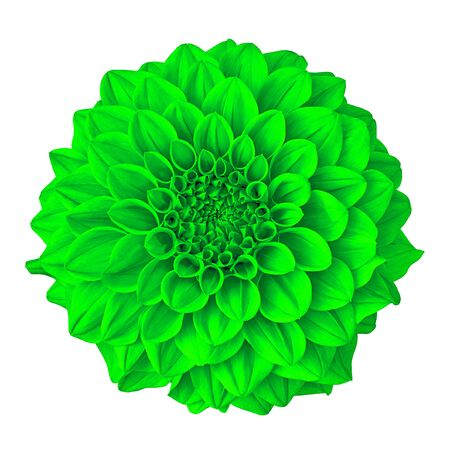 flower green dahlia isolated on white background with clipping path. Close-up. Nature. Reklamní fotografie