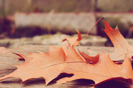 selective focus: Selective focus on autumn leaves. Stock Photo