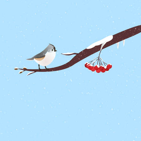 ashberry: Wintery scene with a cute bird on a branch of red ashberry. Stock Photo