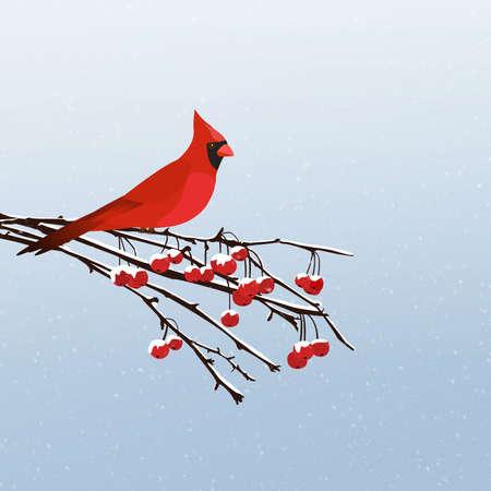rowan tree: Winter scene with a red cardinal bird sitting on a rowan berry tree branch Stock Photo
